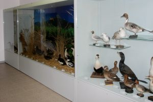 Ornithological Museum in Varenna
