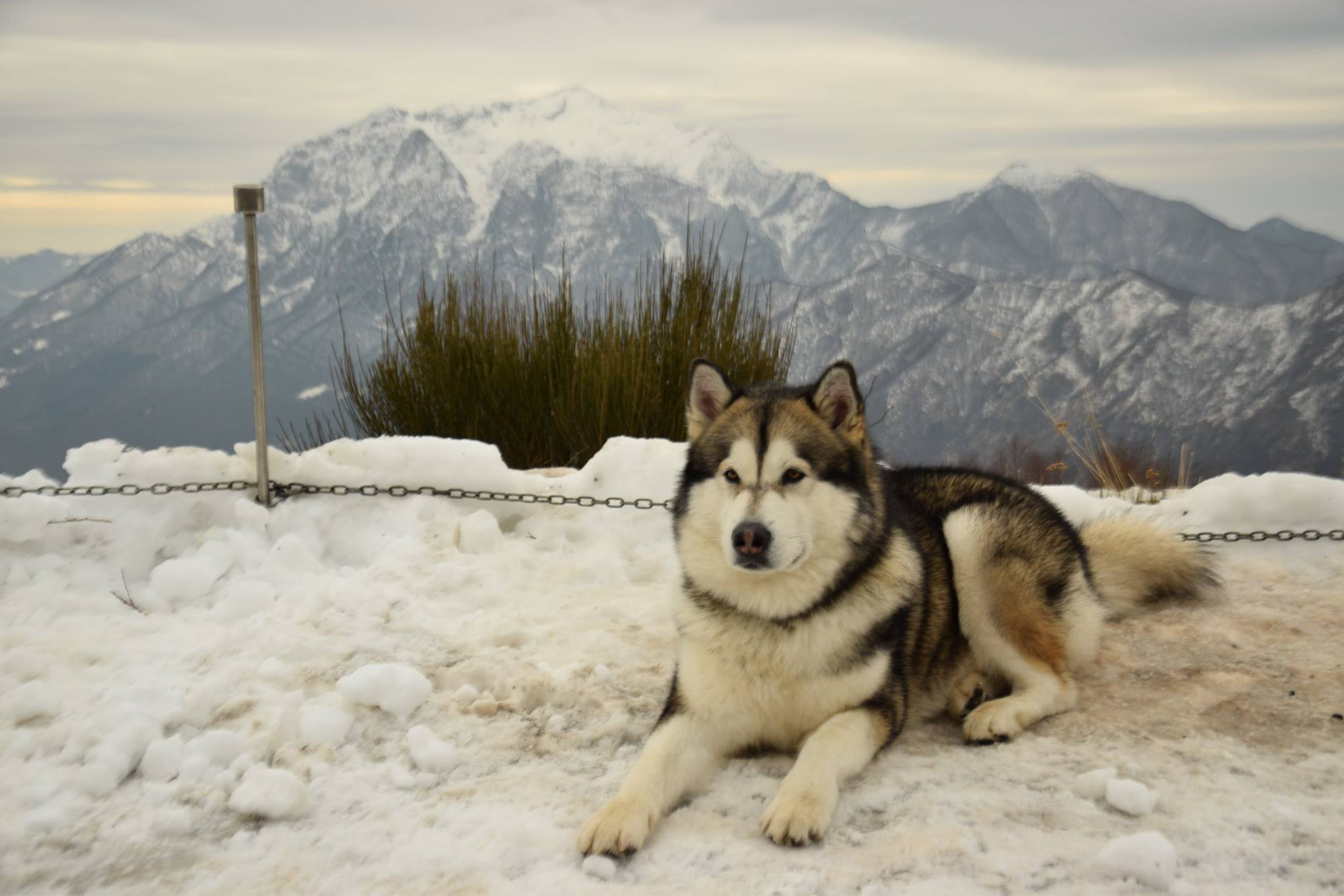 XV Alaskan Malamute Sleddog Day a Casargo